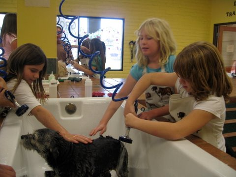 Single self service dog wash 8 daily deals in murrieta temecula single self service dog wash 8 solutioingenieria Gallery