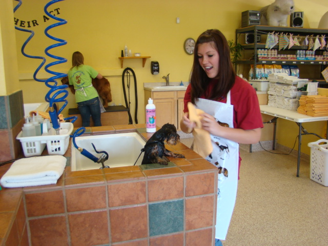 Single self service dog wash 8 daily deals in murrieta temecula single self service dog wash 8 daily deals in murrieta temecula wildomar mad deals solutioingenieria Gallery