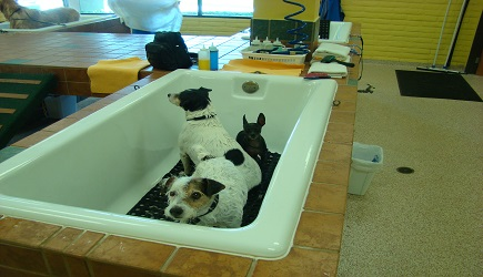 Savings on grooming bathing and training at the laundered mutt savings on grooming bathing and training at the laundered mutt daily deals in murrieta temecula wildomar mad deals solutioingenieria Gallery
